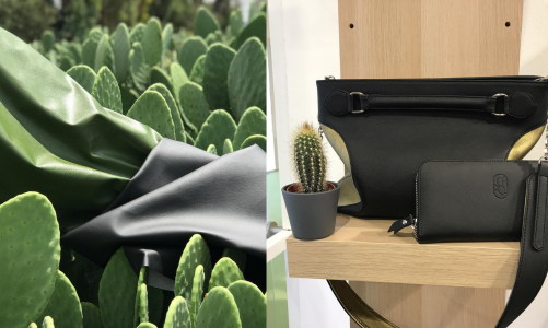 Sustainability: New vegan-leather created from cactus